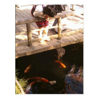 Carp pond postcard