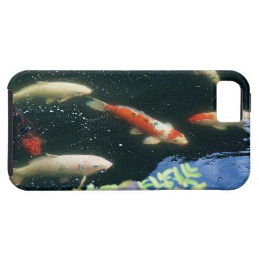 Carpa iPhone 5 Case-Mate Protector