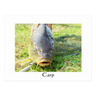 Carpa - Karpfen - Ponty Tarjeta Postal