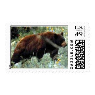 Carpathian Bear Stamps