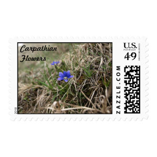 Carpathian Flowers Stamp