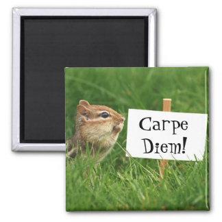 Carpe Diem Chipmunk Magnet