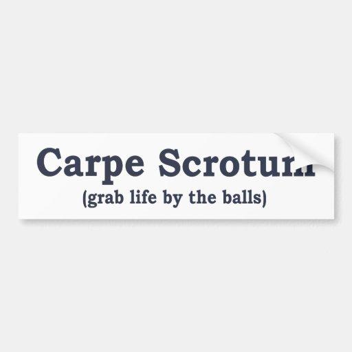 Carpe Scrotum Bumper Stickers