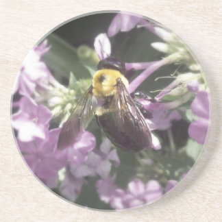 Carpenter Bee 2 Coaster