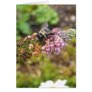 Carpenter Bee Card