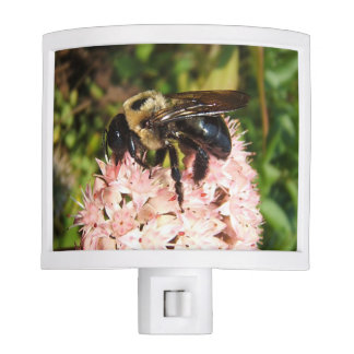 Carpenter Bee ~ Nightlight
