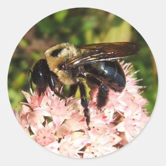 Carpenter Bee ~ sticker