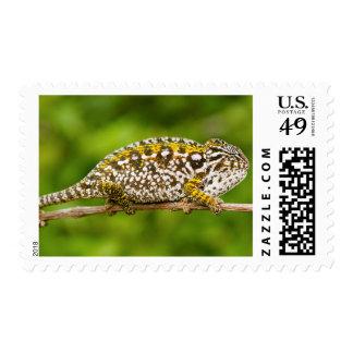 Carpet chameleon postage