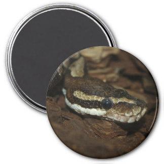 Carpet python magnet