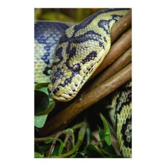 Carpet Python Personalized Stationery