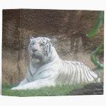 Carpeta blanca del tigre que toma el sol