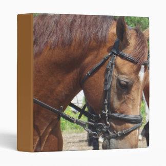 Carpeta clavada con tachuelas del caballo de proye