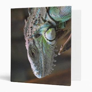 Carpeta con la cabeza del lagarto colorido de la i