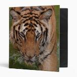 Carpeta de Avery del tigre de Tailandia