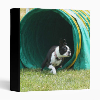 Carpeta de Boston Terrier de la agilidad