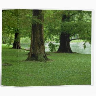 Carpeta de los árboles de la secoya