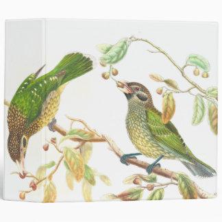 Carpeta de los pájaros del Catbird de Gould