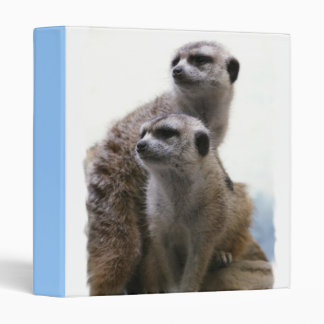 Carpeta de los pares de Meerkat