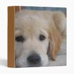 Carpeta de oro linda del perrito