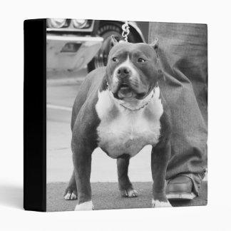 Carpeta de Staffordshire Terrier americano