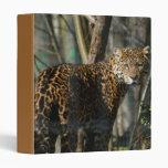 Carpeta del gato de Jaguar