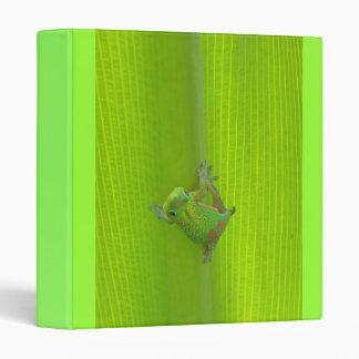 Carpeta del Gecko