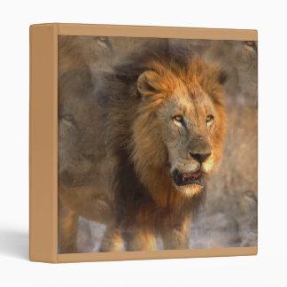 Carpeta del león