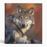 Carpeta del lobo gris