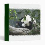 Carpeta del oso de panda