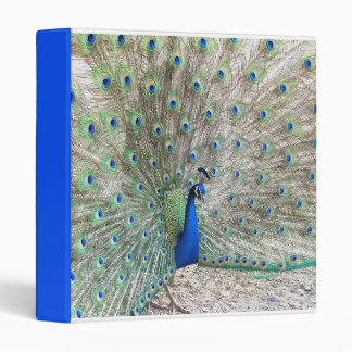 Carpeta del pájaro del pavo real