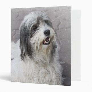 Carpeta del perro