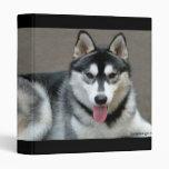 Carpeta del perro del Malamute de Alaska