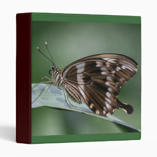 Carpeta gigante de la mariposa de Swallowtail
