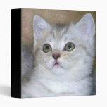 Carpeta gris del gatito