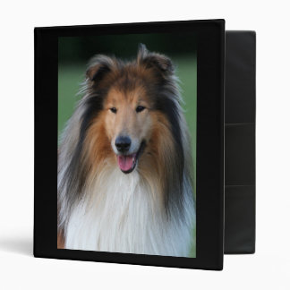 Carpeta hermosa del retrato del perro del collie