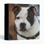 Carpeta joven de Staffordshire bull terrier
