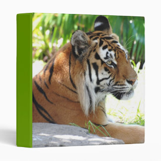 Carpeta joven del tigre
