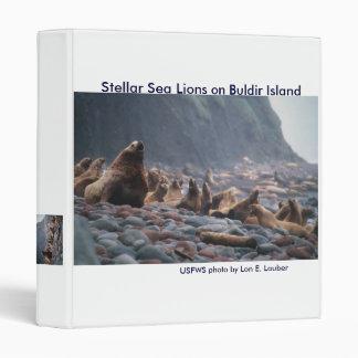 """Carpeta/leones marinos de Steller en la isla de Bu Carpeta 1"""""""