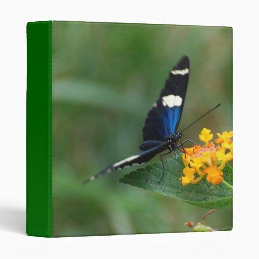 Carpeta negra y azul de la mariposa