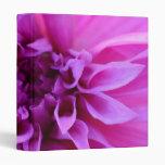 Carpeta púrpura del crisantemo