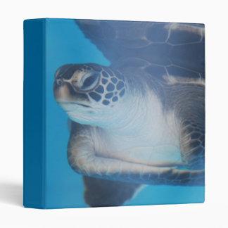 Carpeta subacuática de la tortuga