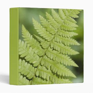 Carpeta verde del helecho