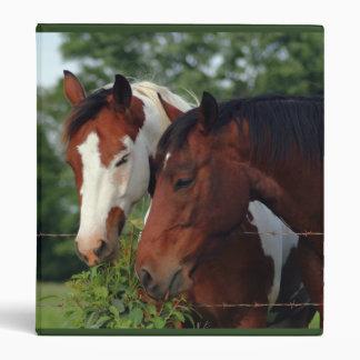 Carpetas del caballo de la fotografía