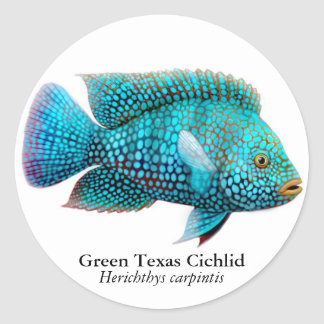 Carpintis Texas Cichlid Sticker