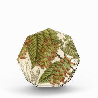 Carpinus japonica, Betulaceae Acrylic Award