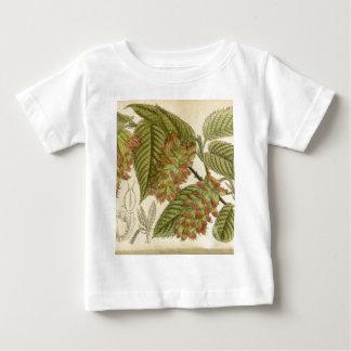 Carpinus japonica, Betulaceae Baby T-Shirt