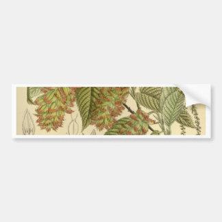 Carpinus japonica, Betulaceae Bumper Sticker