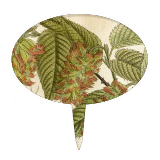 Carpinus japonica, Betulaceae Cake Topper