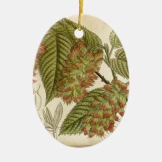 Carpinus japonica, Betulaceae Ceramic Ornament