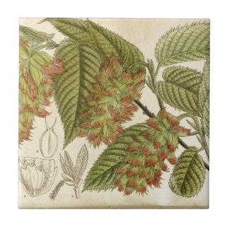 Carpinus japonica, Betulaceae Ceramic Tile
